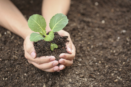栄養のある土で育った植物