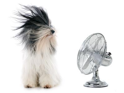 扇風機に吹かれる犬