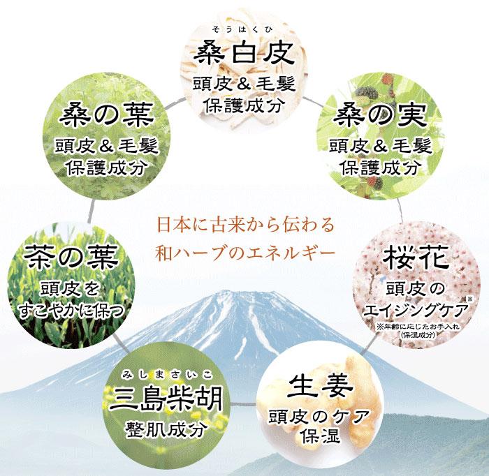 桑白皮・桑の実・桑の葉・茶の葉・三島柴胡・生姜・桜花。日本に古来から伝わる和ハーブのエネルギー