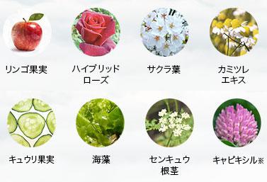リンゴ果実・ハイブリッドローズ・サクラ葉・カミツレエキス・キュウリ果実・海藻・センキュウ根茎・キャピキシル