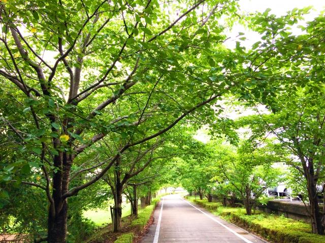 公園の街路樹