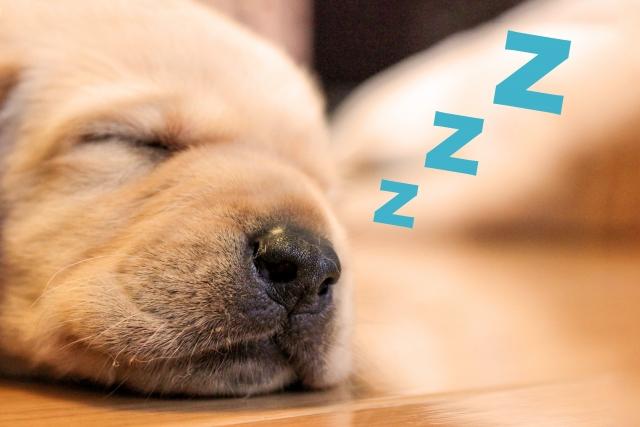 熟睡する子犬