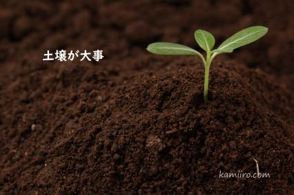 豊かな土壌に生えた新芽