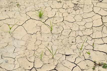 乾燥して地割れしている土壌